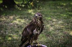 Одичалая птица Стоковое Изображение
