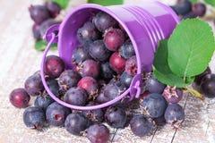 Одичалая расслоина ягод из ведра Стоковые Фото