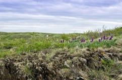 Одичалая радужка в горе Стоковое Изображение RF