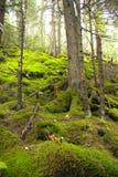 Одичалая древесина Стоковое Изображение RF