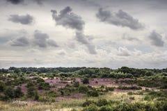 Одичалая сельская местность Стоковые Изображения