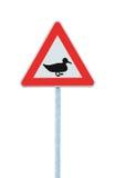 Одичалая утка птицы пересекая вперед предупреждая дорожный знак движения, большая детальная изолированная обочина остерегается кр Стоковые Фотографии RF