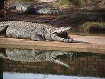 Одичалая Южная Африка Стоковые Фото