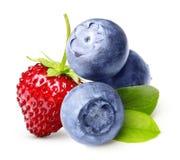 Одичалая ягода, клубника, изолированная голубика Стоковая Фотография