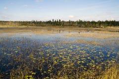 Одичалое заболоченное место в Канаде стоковое фото
