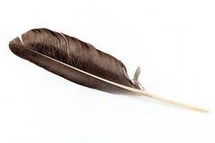 Одичалое изолированное перо птицы Стоковое Изображение