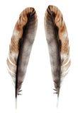 Одичалое изолированное перо птицы Стоковые Изображения