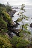 Одичалое канадское западное побережье Стоковые Изображения