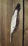 Одичалое перо птицы Стоковые Изображения