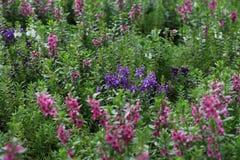 Одичалое поле цветка лета Стоковое Изображение RF