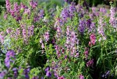 Одичалое поле цветка лета Стоковое Изображение