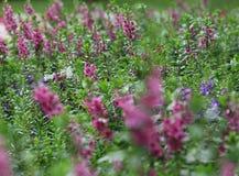 Одичалое поле цветка лета Стоковые Изображения RF