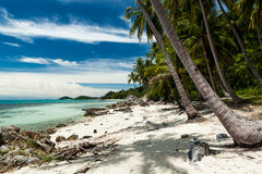 одичалое пляжа тропическое Стоковая Фотография RF
