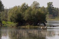 Одичалое река в горах Юры, Франция Стоковое Изображение RF