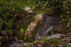 Одичалое река горы с камнями мха и ветвями дерева Стоковое Фото