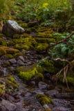 Одичалое река горы с корнями мха и ветвями дерева Стоковая Фотография RF