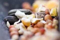 Одичалое семя птицы Стоковое Фото