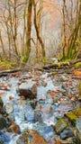 Одичалые гористые местности Стоковое Изображение RF