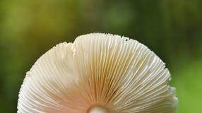 Одичалые грибы в предпосылке леса природы стоковое фото