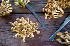 Одичалые грибы пластинчатого гриба меда на деревянной предпосылке Стоковое Фото