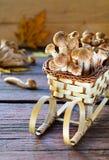 Одичалые грибы пластинчатого гриба меда на деревянной предпосылке Стоковая Фотография RF