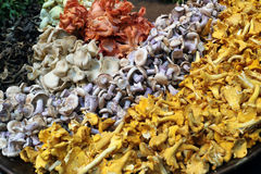 Одичалые грибы Стоковое фото RF
