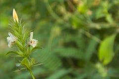 Одичалые индийские цветки Стоковые Изображения RF