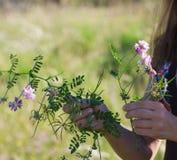 Одичалые курчавые цветки Стоковые Фотографии RF