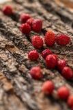 Одичалые клубники на деревянной предпосылке Стоковое Изображение
