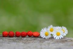 Одичалые клубники Стоковая Фотография RF