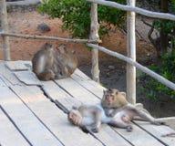 Одичалые обезьяны на компасной площадке суда Стоковые Изображения RF