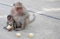 Одичалые обезьяны на улицах Стоковая Фотография