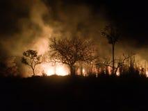Одичалые огни Стоковые Фото