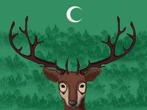 Одичалые олени стоя в лесе под луной Стоковые Изображения RF