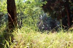 Одичалые парк, трава и деревья, природа стоковые фото