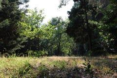 Одичалые парк, трава и деревья, природа Стоковое Фото
