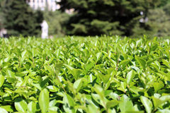 Одичалые парк, трава и деревья, природа стоковая фотография rf