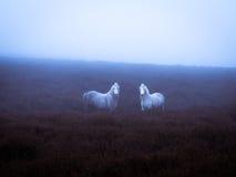 Одичалые пони и атмосферический свет Стоковое Изображение