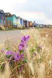 Одичалые прибрежные цветки и хаты пляжа Стоковые Изображения RF