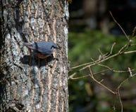Одичалые птицы живут Стоковая Фотография