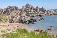 Одичалые птицы на прибрежных утесах Стоковая Фотография RF