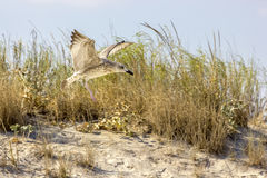 Одичалые птицы на румынском пляже Стоковые Изображения