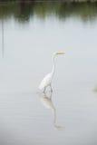 Одичалые птицы Стоковая Фотография RF