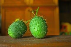 Одичалые плодоовощи зеленого цвета огурца Стоковая Фотография RF