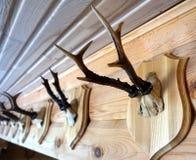 Одичалые рожки самца оленя Стоковая Фотография