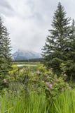 Одичалые розы и скалистые горы - Banff NP, Канада Стоковое Изображение RF