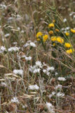 Одичалые терновые заводы и цветки Стоковая Фотография