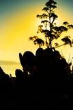 Одичалые травы и засорители в луге Стоковое Фото