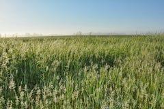 Одичалые травы 2 Стоковая Фотография RF