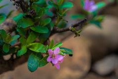 Одичалые фиолетовые цветки внутри перед Стоковые Изображения